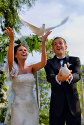 Голуби белые на свадьбу