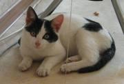 Котенок в хорошие руки - Саратов
